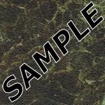 Olympus Formica Sample